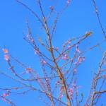 """Das Foto:""""Pfirsichbaum"""" ist von Susann Schulz."""