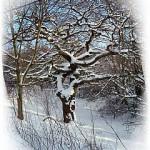 winter-maerchen-k  http://quarknet.de/fotos-wald-waelder.php