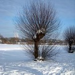 winter-wiese-k  http://quarknet.de/felder-wiesen.php