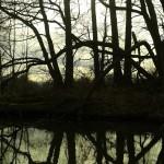 Tagtraum im Unterspreewald bei Leibsch Foto von Liane Fehler 2015