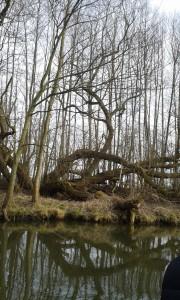 Verschlungen im Unterspreewald bei Leibsch Foto von Liane Fehler 2015