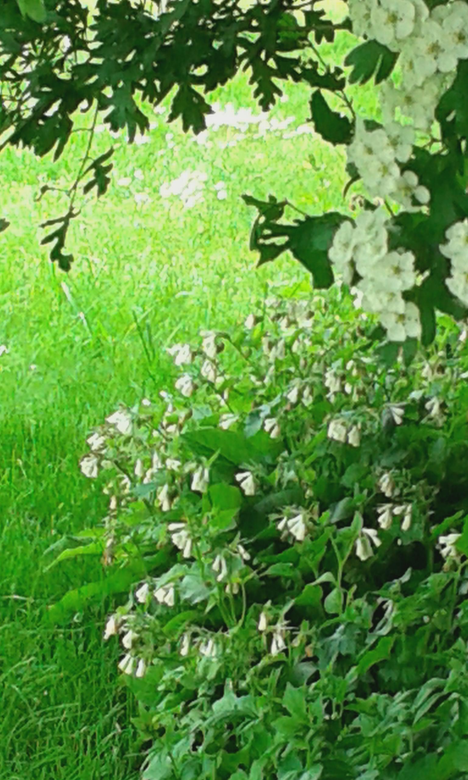 Frühlingslied - Foto von Liane Fehler