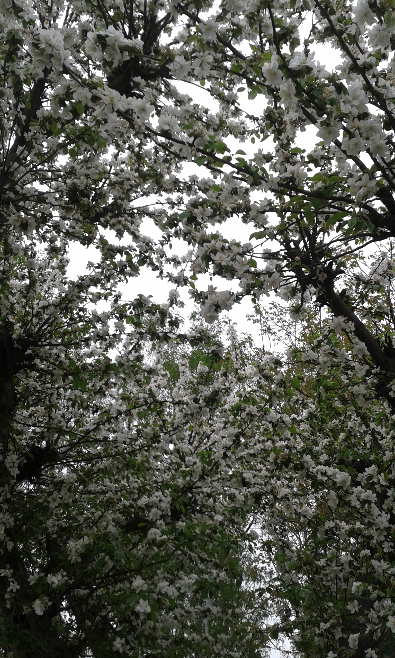 Liane Fehler - Foto: Blütenzauber